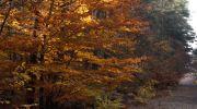 Jesień-w-obiektywie-12
