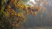 Jesień-w-obiektywie-15