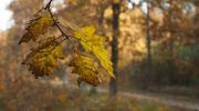 Jesień-w-obiektywie-16