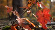 Jesień-w-obiektywie-18