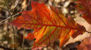 Jesień-w-obiektywie-19