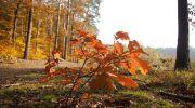 Jesień-w-obiektywie-20