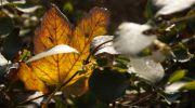 Jesień-w-obiektywie-24