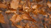 Jesień-w-obiektywie-26