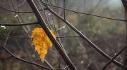 Jesień-w-obiektywie-27