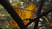 Jesień-w-obiektywie-32