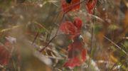 Jesień-w-obiektywie-34