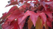 Jesień-w-obiektywie-5